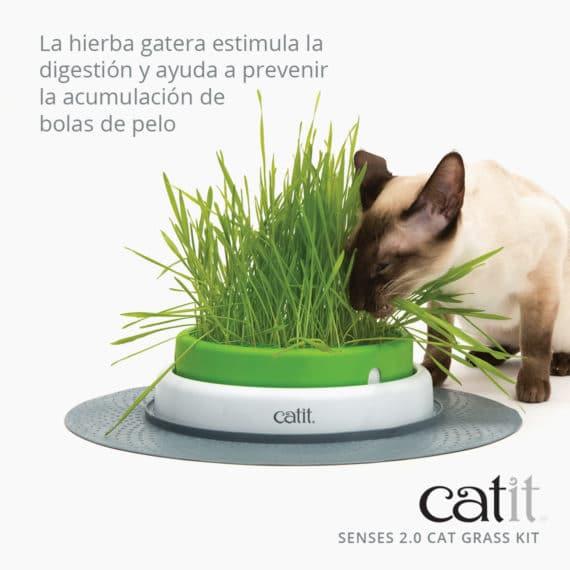 43162_Senses 2.0 Cat Grass Kit_Features 01_ES_