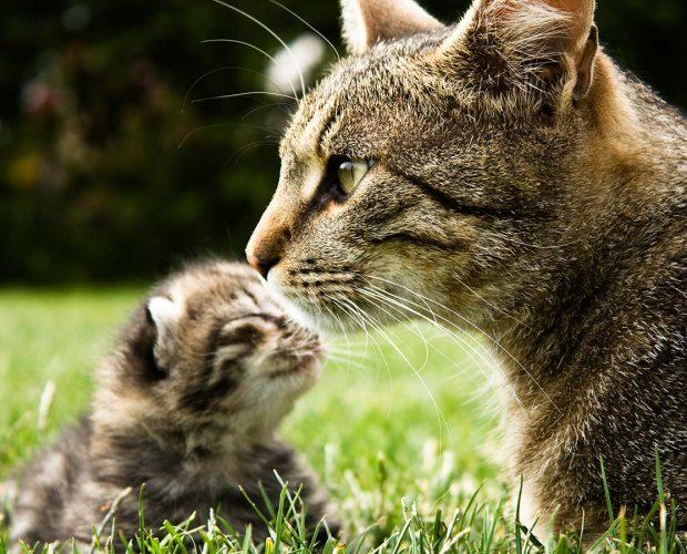 Presentar tu nuevo gatito a tus otras mascotas - blog