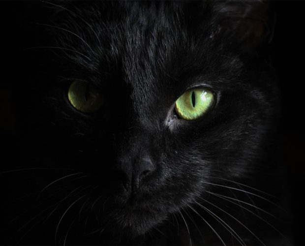 black cat featured