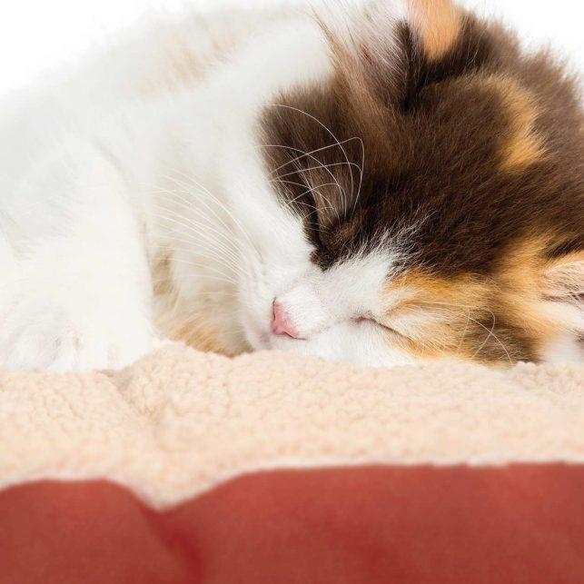 Cat-sleeping-in-red-cat-bed