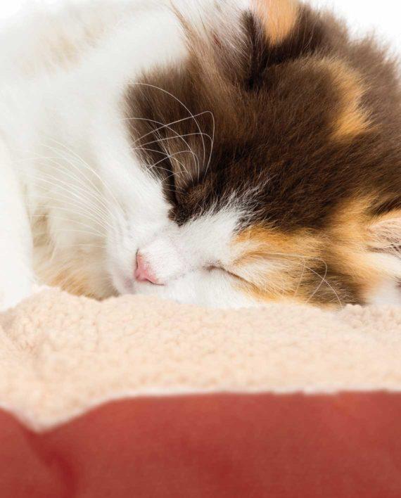 Vesper-Cat-Bed-L-B-red