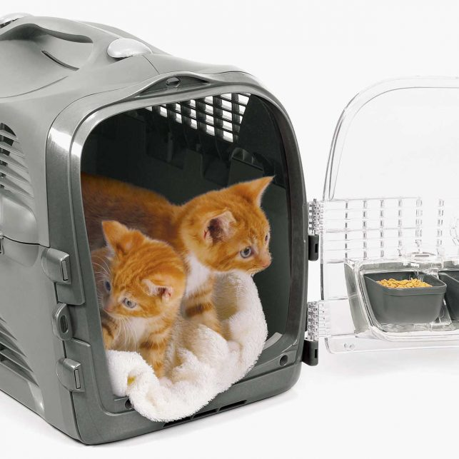 ideal para llevar o quedarse en el veterinario