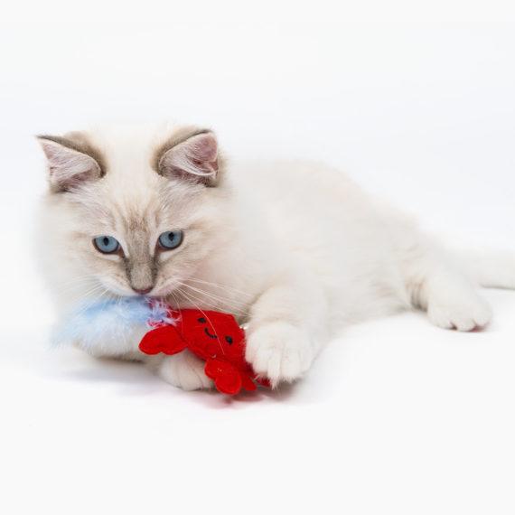 Pirates - Catnip Toy - Crab B