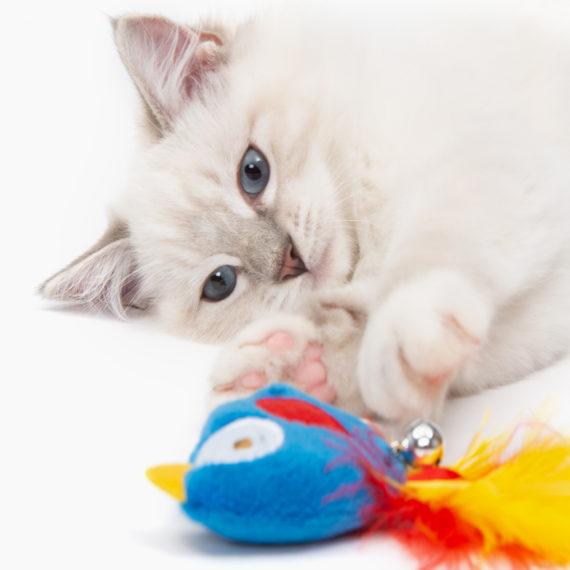 Pirates - Catnip Toy - Parrot B