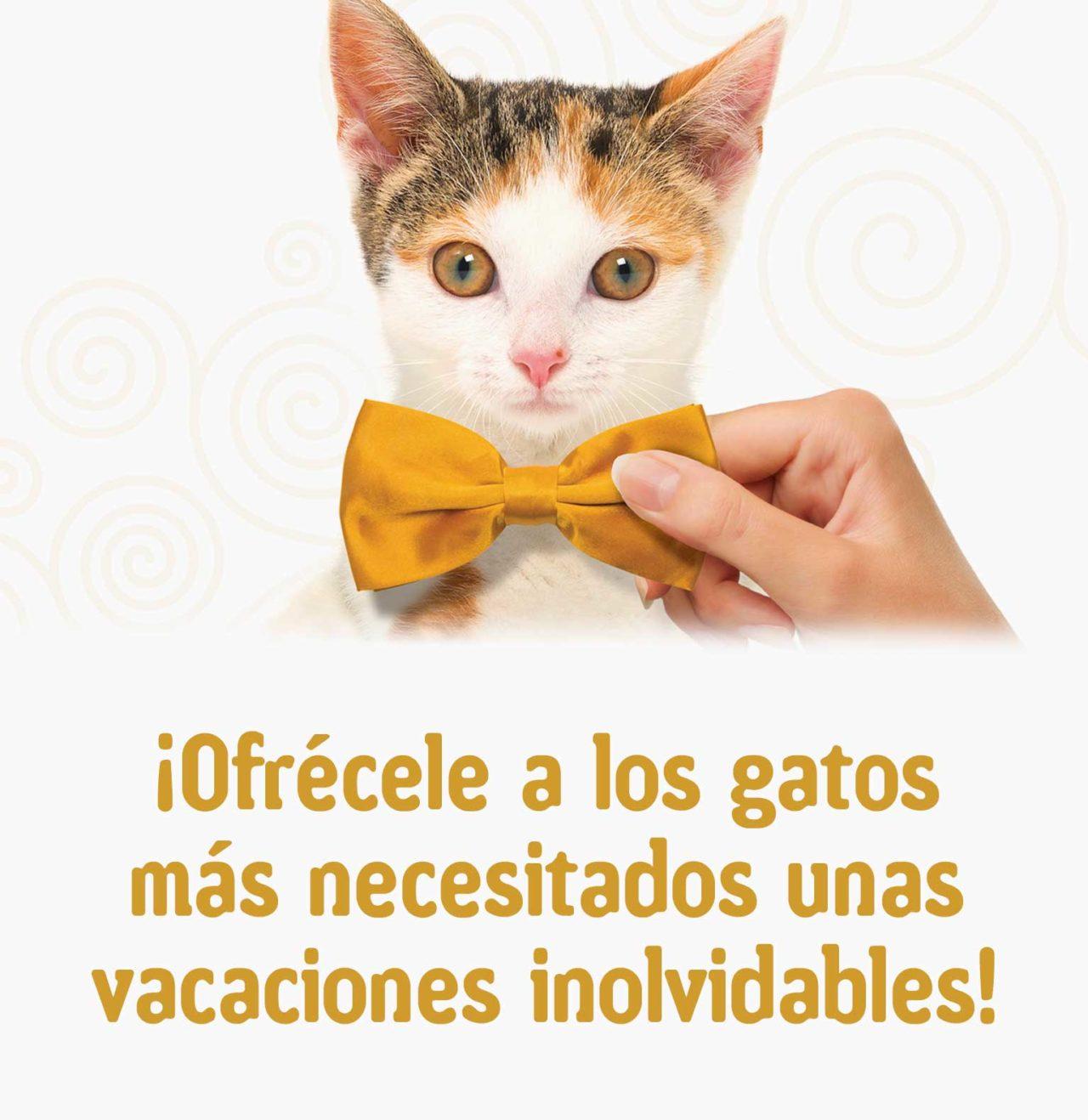¡Ofrécele a los gatos más necesitados unas vacaciones inolvidables!