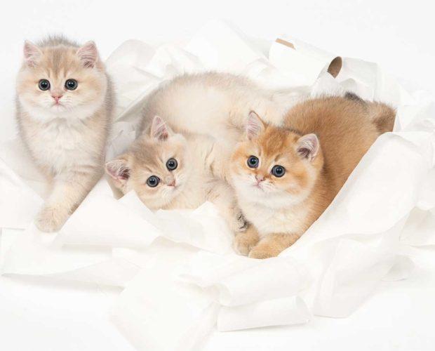 La habitación del gatito