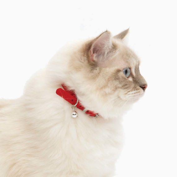 Collar para gatos unicolor con hebilla convencional rojo
