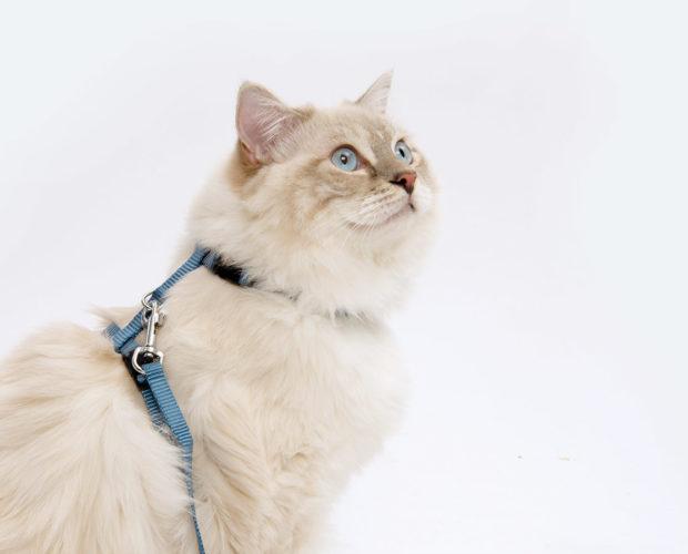 Arnés para gatos y correa Catit azul claro