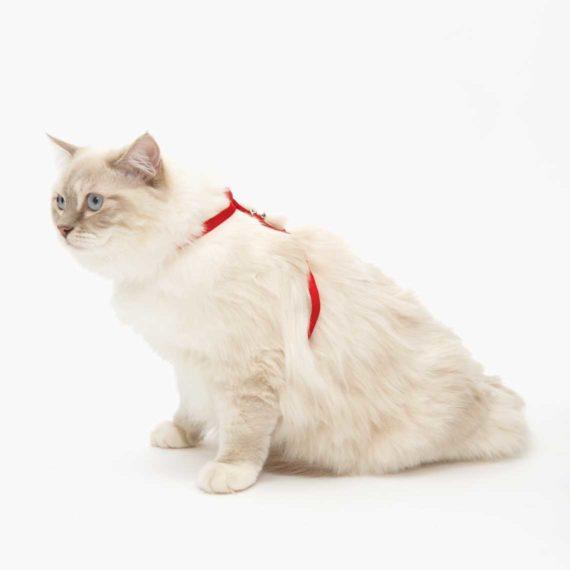 Arnés para gatos Catit rojo
