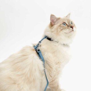 Arnés para gato con correa azul claro Catit