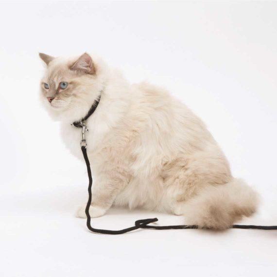 Correa para gatos extra larga Catit negra
