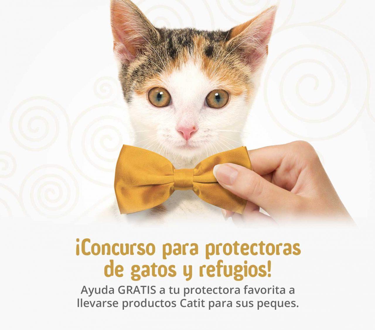 Concurso para protectoras de gatos y refugios
