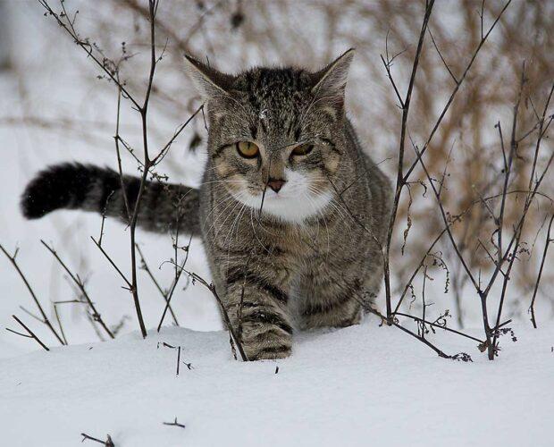 Cómo mantener a tu gato a salvo durante el invierno