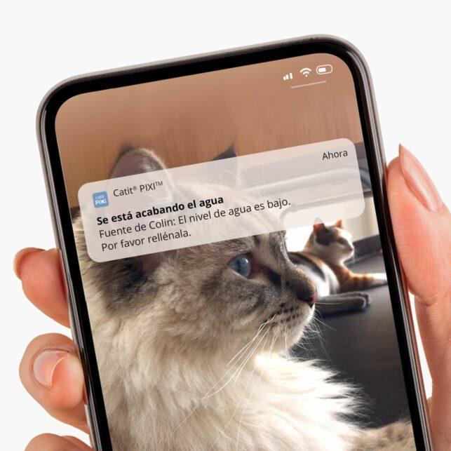 Habilita las notificaciones en la aplicación para recibir mensajes